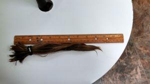 Katie's ponytail of hair