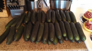 Lots of cucumbers!